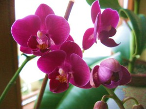 meine kleinste Orchidee